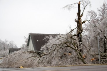 Tree Damage from the Ice Storm