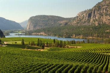 Okanagan Valley Vineyard Scenic, British Columbia