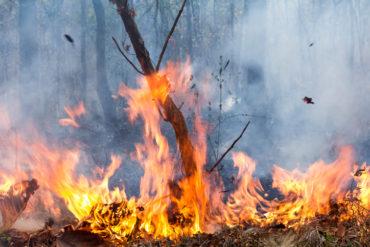 Bush fire destroys forest