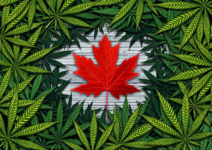 Canadian Marijuana